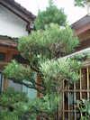 Kouyaburo1
